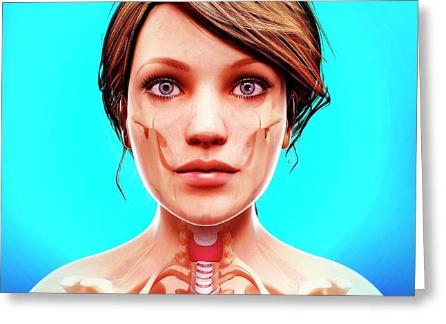 Female Anatomy Greeting Card by Pixologicstudio/science Photo Library