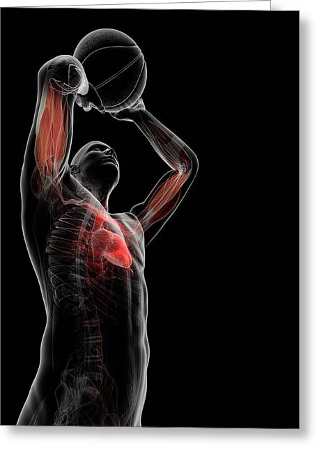 Male Anatomy Greeting Card by Sciepro/science Photo Library