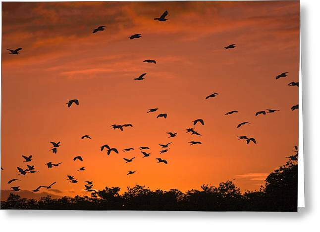 Birds At Sunset Greeting Card by Sally Weigand