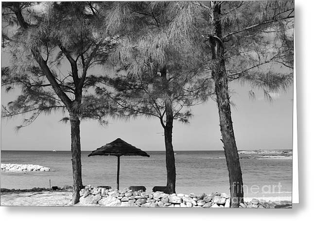 A Bahamas Scene In Black And White Greeting Card