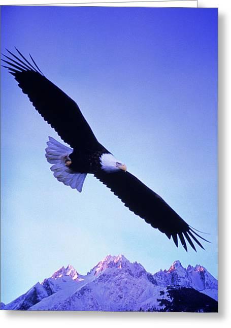 A Bald Eagle Flies Over Alaskas Chilkat Greeting Card