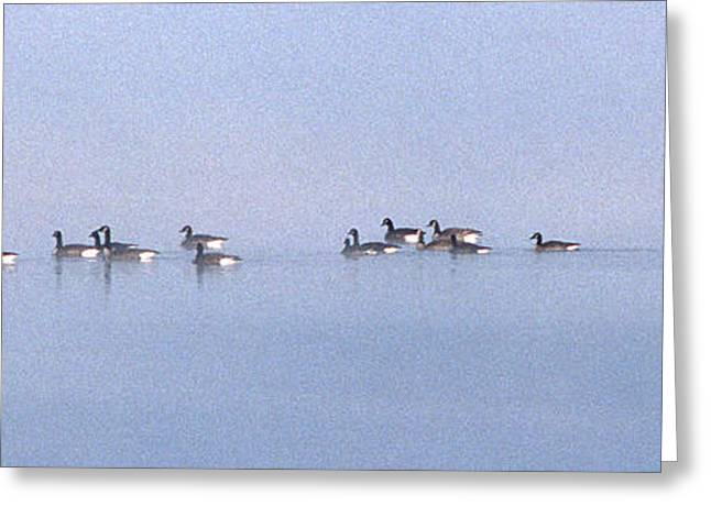A Band Of Geese Greeting Card by Skip Willits