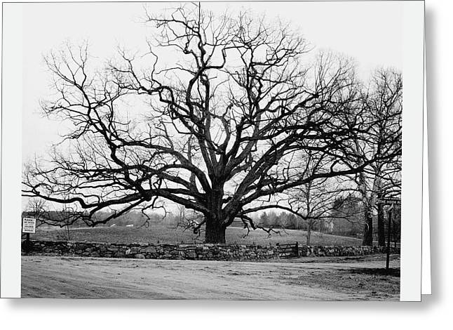 A Bare Oak Tree Greeting Card by Tom Leonard