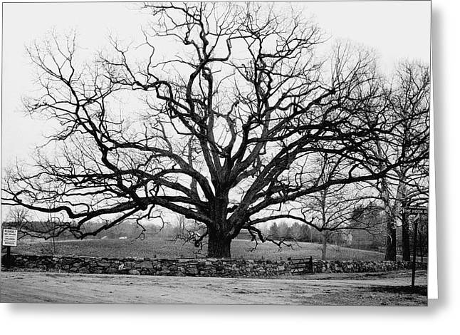 A Bare Oak Tree Greeting Card