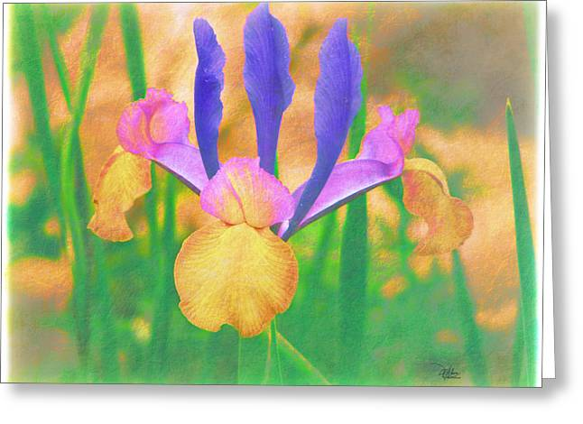 A Bearded Iris In My Vincent Van Gogh Garden Greeting Card