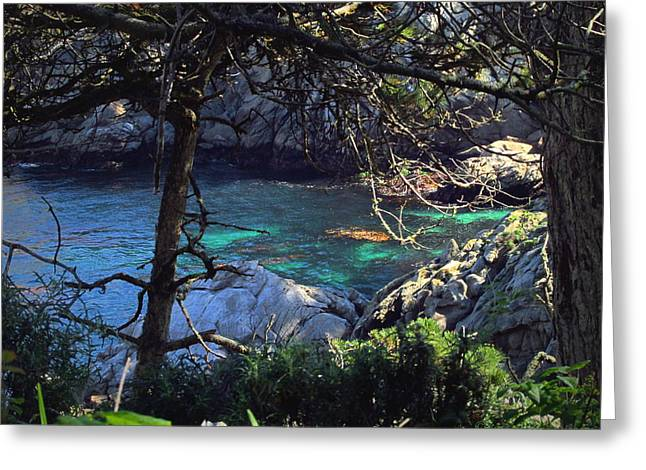 A Beautiful Cove At Point Lobos Greeting Card by Joyce Dickens