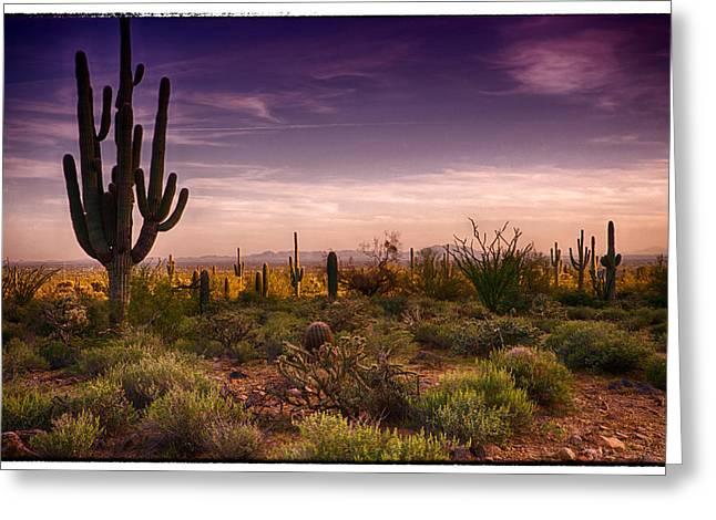 A Beautiful Desert Evening  Greeting Card by Saija  Lehtonen