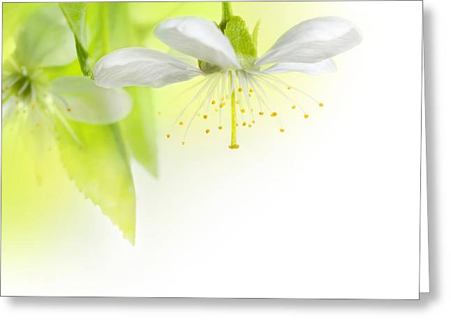 A Beautiful Spring Flowers Greeting Card by Boon Mee