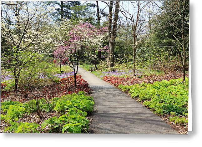 A Beautiful Spring Walk Greeting Card by Trina  Ansel