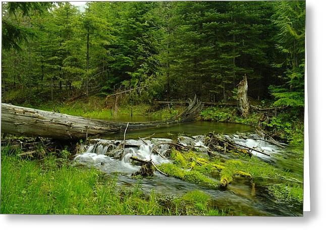 A Beaver Dam Overflowing Greeting Card by Jeff Swan