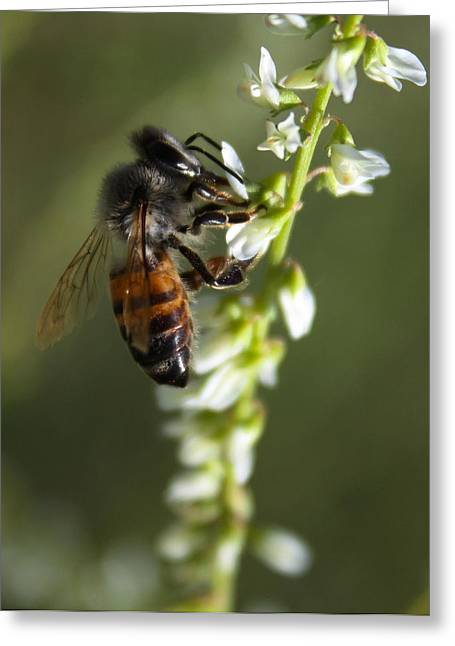 Greeting Card featuring the photograph A Bee About His Business by Richard Stephen