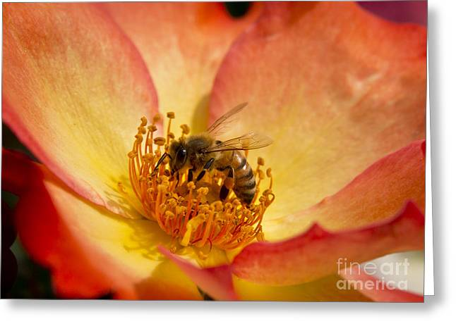 A Bee Searching Greeting Card