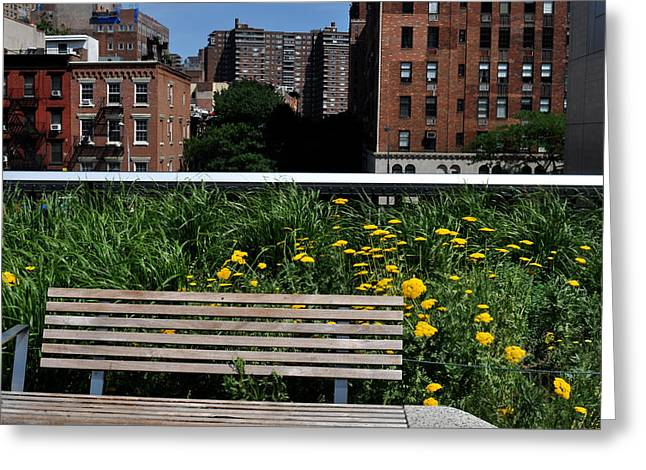 A Bench On The High Line In New York City Greeting Card by Diane Lent