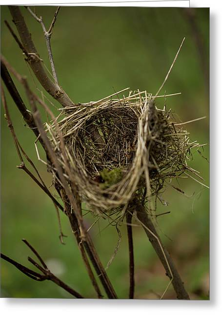 A Bird-nest. Rhoen Mountains, Germany Greeting Card