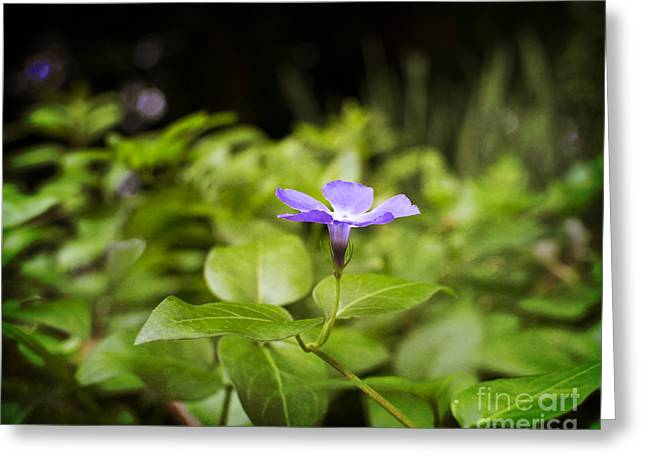 Greeting Card featuring the photograph A Bit Of Purple by Maria Janicki