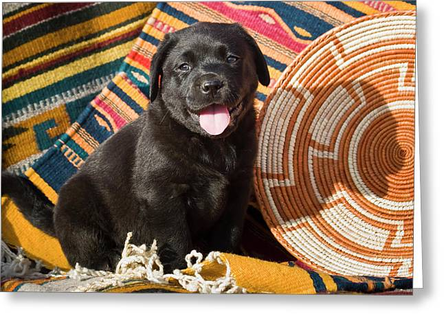 A Black Labrador Retriever Puppy Greeting Card by Zandria Muench Beraldo