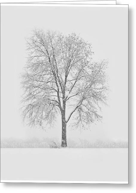 A Blizzard Moment Greeting Card by Nancy Edwards
