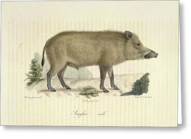 A Boar Greeting Card