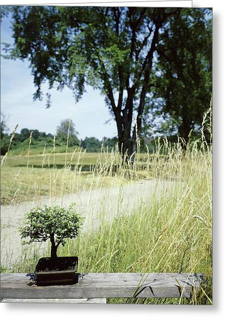 A Bonsai Tree In A Hayfield Greeting Card