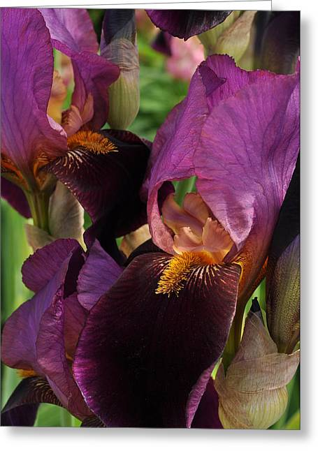 Greeting Card featuring the photograph A Bouquet Of Lilies by Sabine Edrissi