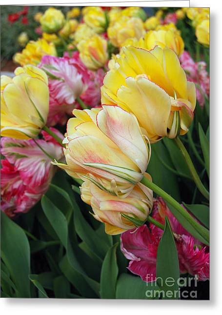 A Bouquet Of Tulips For You Greeting Card by Eva Kaufman
