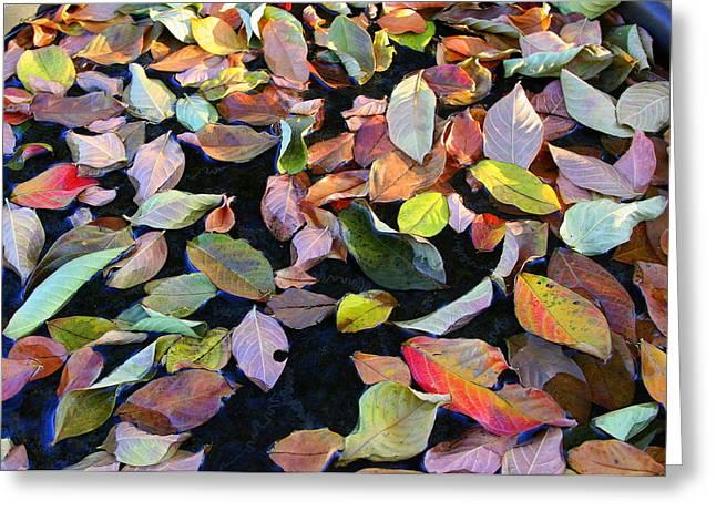 A Bowl Of Autumn Greeting Card by Paula Tohline Calhoun