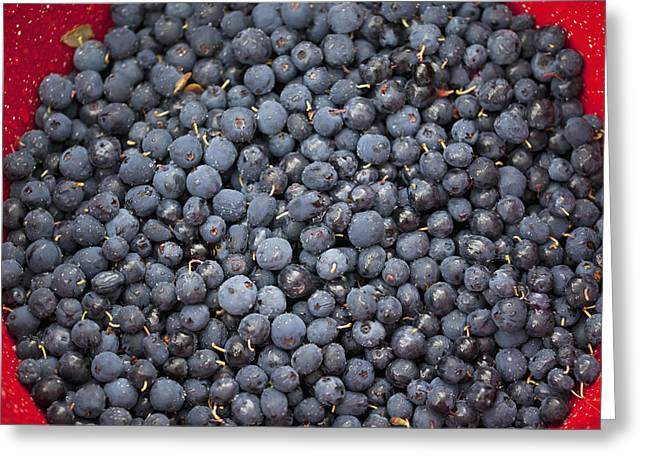 A Bowl Of Blueberriesalaska United Greeting Card