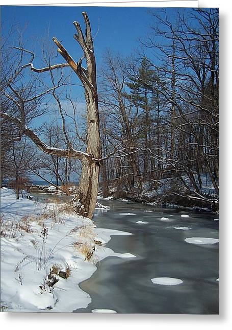 A Bright January Day By A Stream Greeting Card