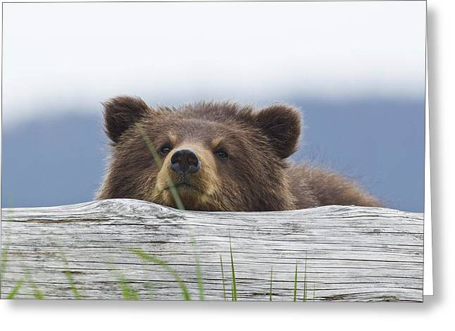 A Brown Bear Cub Rests Its Head On A Greeting Card by John Hyde