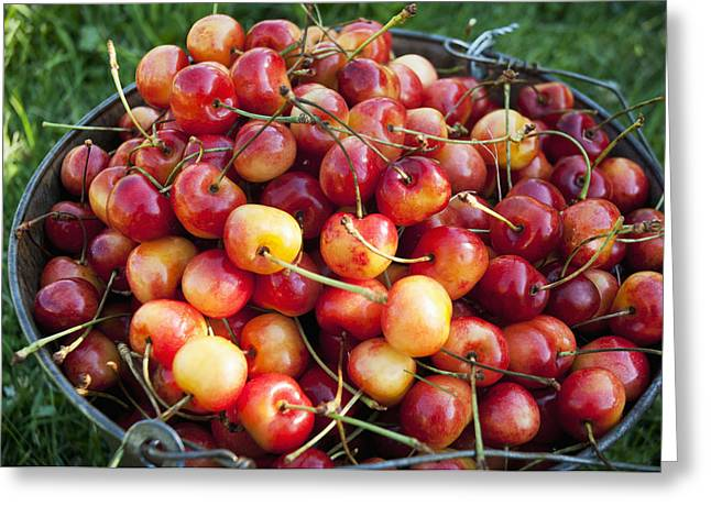 A Bucket Of Ripe Ranier Cherries Greeting Card by Leanna Rathkelly