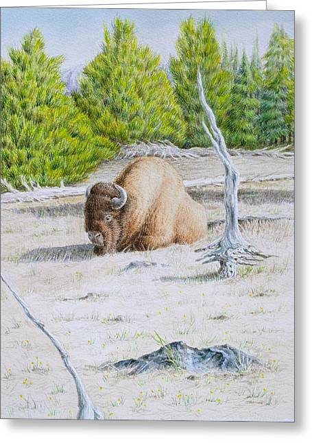 A Buffalo Sits In Yellowstone Greeting Card