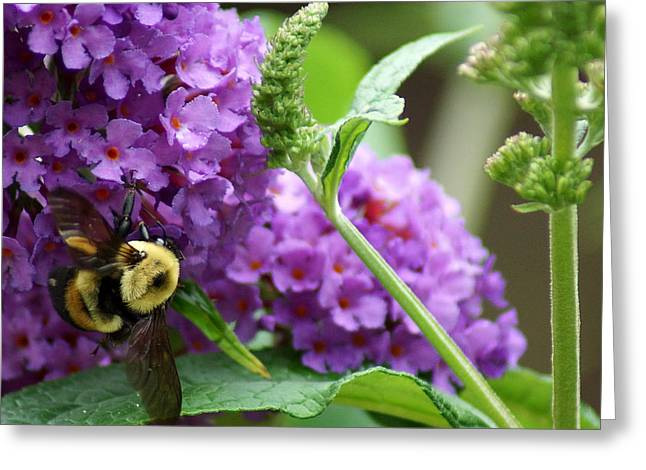 A Bumblebee In The Garden Greeting Card by Kim Pate