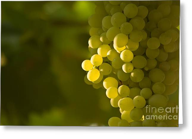 A Bunch Of Green Grapes Greeting Card by Leyla Ismet
