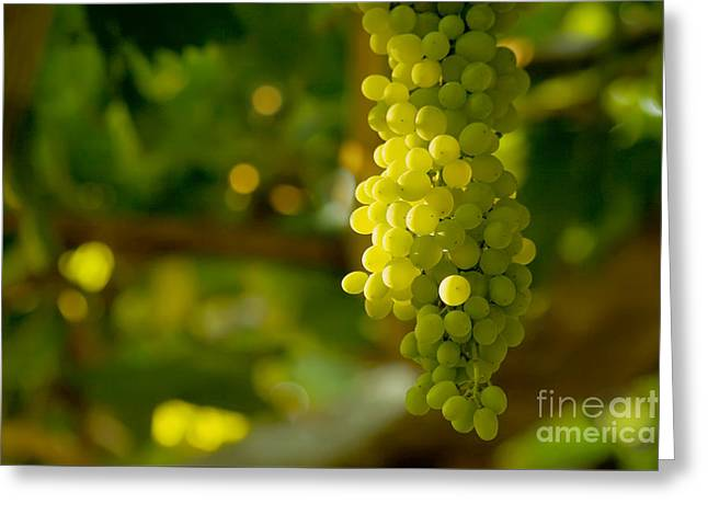 A Bunch Of White Grapes  Greeting Card by Leyla Ismet