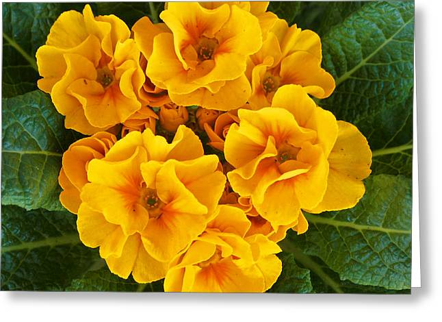 A Bunch Of Yellow Flowers Greeting Card by Kenny Bosak