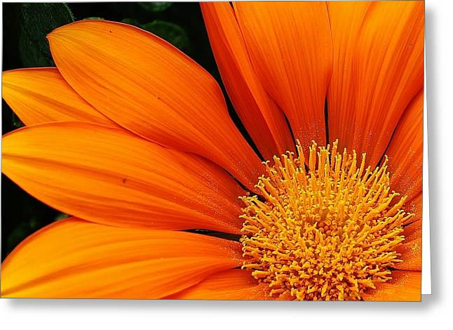 A Burst Of Orange Greeting Card by Bruce Bley