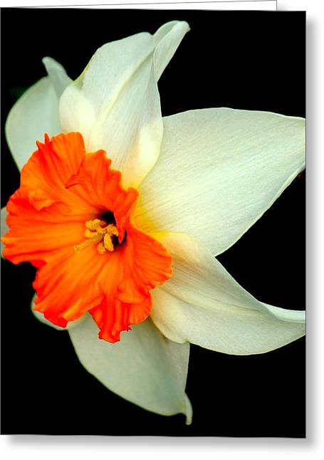 A Burst Of Springtime Glory Greeting Card by Rosanne Jordan