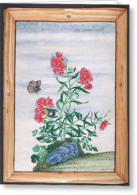 A Butterfly And Some Flowers Greeting Card by British Library