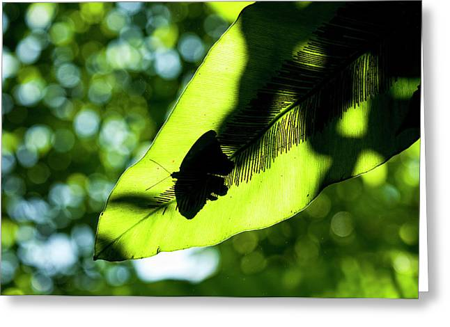 A Butterfly At The Butterfly Park Greeting Card