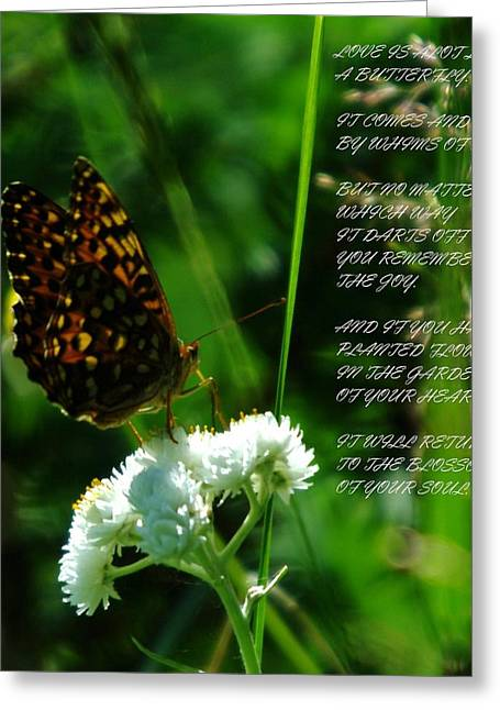 A Butterfly Poem About Love Greeting Card by Jeff Swan
