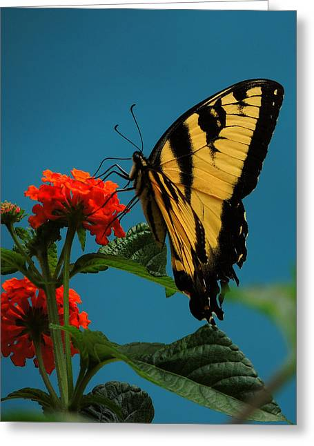 Greeting Card featuring the photograph A Butterfly by Raymond Salani III