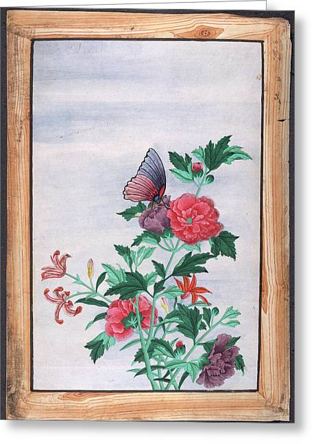A Butterfly Resting On A Flower Greeting Card by British Library