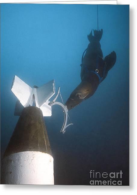 A California Sea Lion Attaches A Greeting Card by Michael Wood