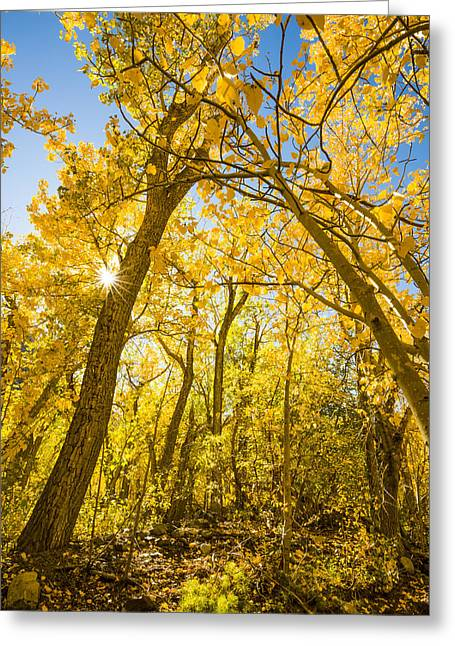 A Canopy Of Aspens At Mcgee Creek In The Eastern Sierras Greeting Card