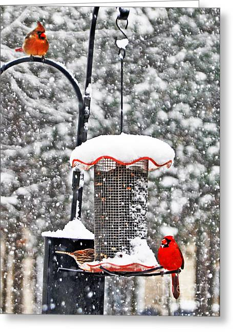 A Cardinal Winter Greeting Card