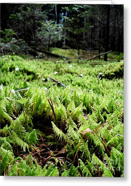 A Carpet Of Moss  Greeting Card by Steven Valkenberg