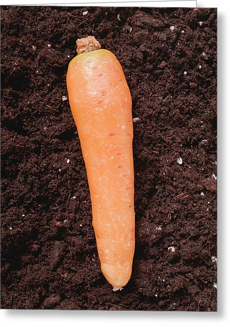 A Carrot On Soil Greeting Card
