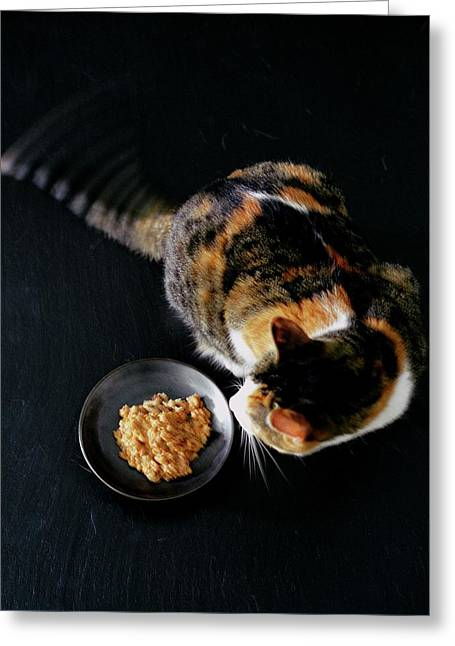 A Cat Beside A Dish Of Cat Food Greeting Card
