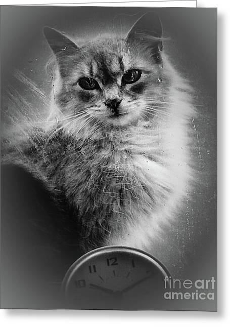 A Cat In The Window Greeting Card