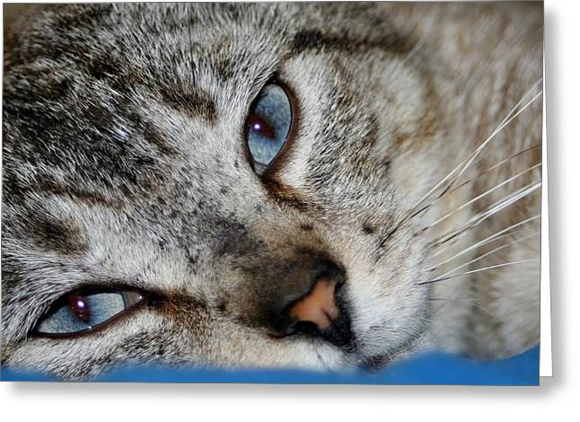 A Cat Named...blue Greeting Card by Barbara S Nickerson